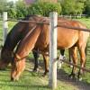 Zobnatica, castle and horse farm