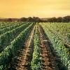 Makedonija, zemlja vina i vinogradarstva