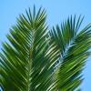 Palme i Mediteran