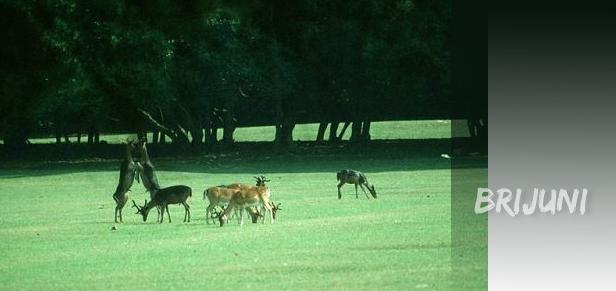 brijuni nacionalni park1 Nacionalni park Brijuni