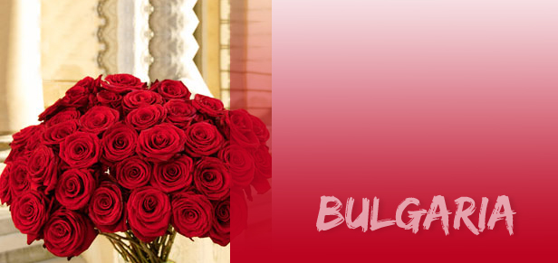 bulgaria Bugarska, dolina ruža