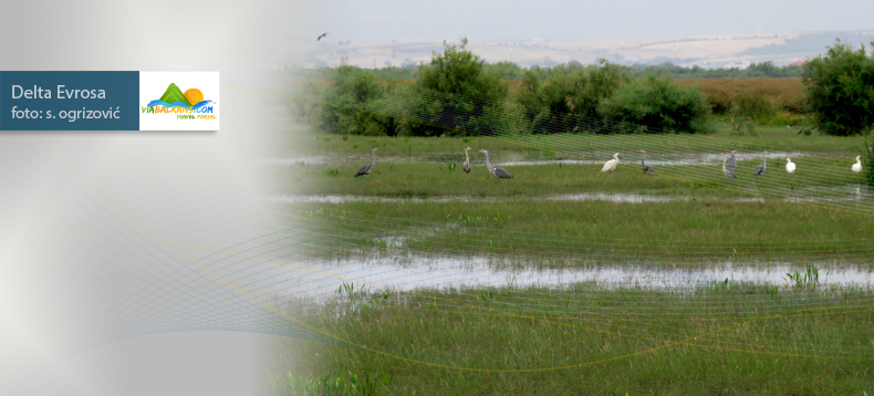 delta-marice-rezervat-ptica